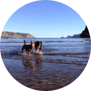 Kakamatua Inlet - Dog Parks