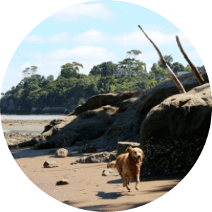 Kauri Point Domain - Dog Parks